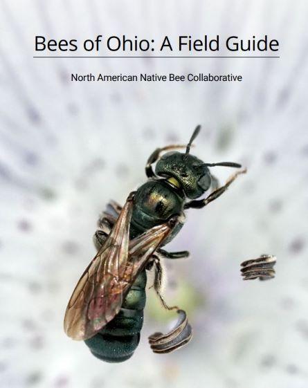 Bee field guide